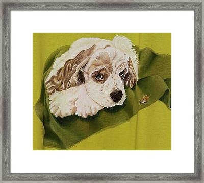 White And Red Bicolor Cocker Spaniel Puppy With Bee Framed Print