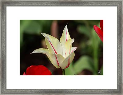 White And Red Flower Framed Print
