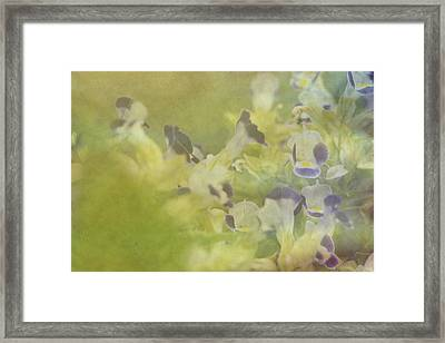 White And Violet Flowers Framed Print
