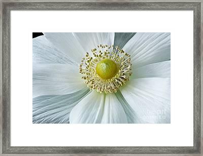 White Anemone 2012 Framed Print by Art Barker