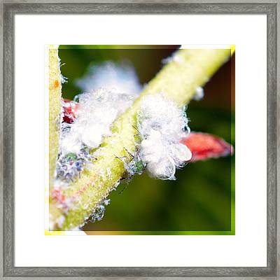 White Aphids  Framed Print by Tommytechno Sweden