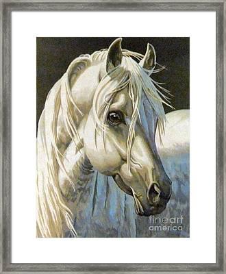 white Arabian Framed Print by Audrey Van Tassell