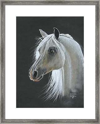 White Arabian Framed Print