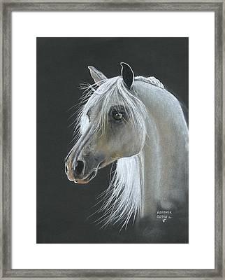White Arabian Framed Print by Heather Gessell