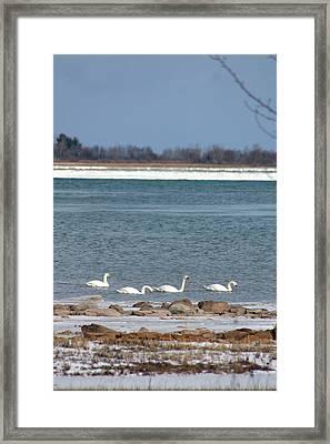 White As Snow Framed Print by Rhonda Humphreys