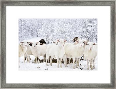 White As Snow Framed Print by Thomas R Fletcher