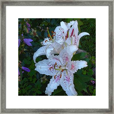 White Asian Lilies Framed Print