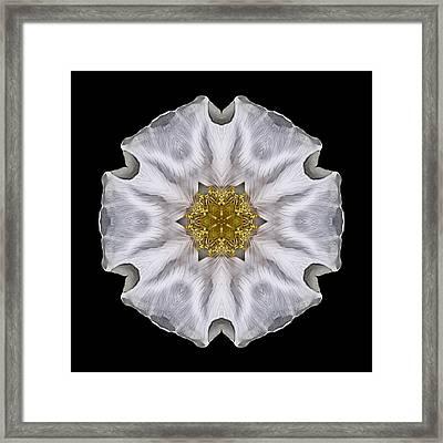 White Beach Rose I Flower Mandala Framed Print