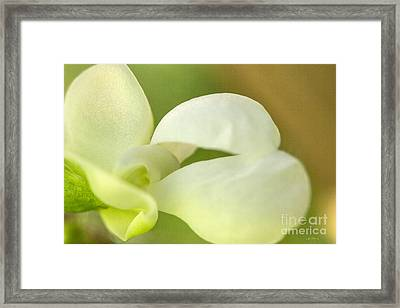 White Bean Blossom Framed Print