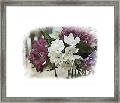 White Beauty Framed Print by Anita Hubbard