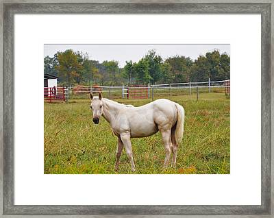 White Beauty Framed Print by Brittany H