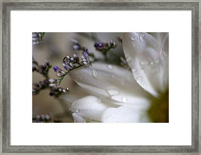 White Beauty Framed Print by John Holloway
