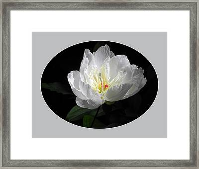 Framed Print featuring the photograph White Beauty by Yue Wang
