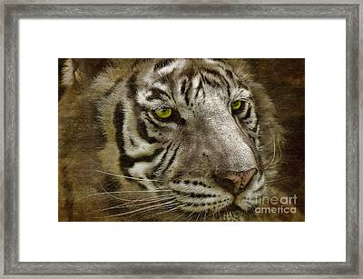 White Bengal Framed Print by Lois Bryan