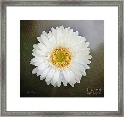 White Bergera Daisy 1 Framed Print