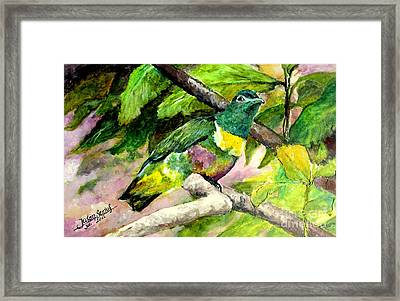White-bibbed Fruit Dove  Framed Print
