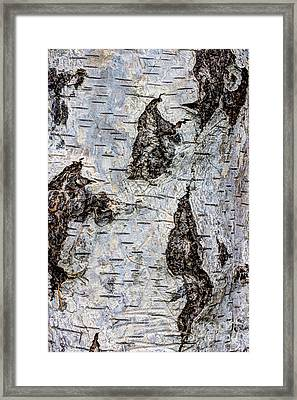 White Birch Abstract  Framed Print by Heidi Smith