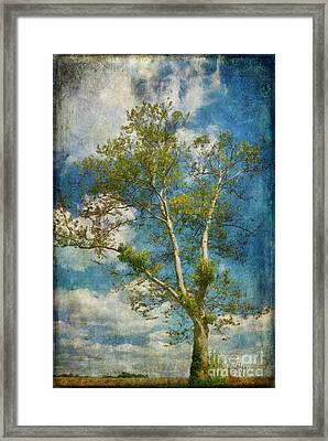 White Birch In May Framed Print by Lois Bryan