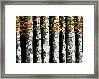 White Birch Trees In Fall On Black Background Painting Framed Print by Keith Webber Jr