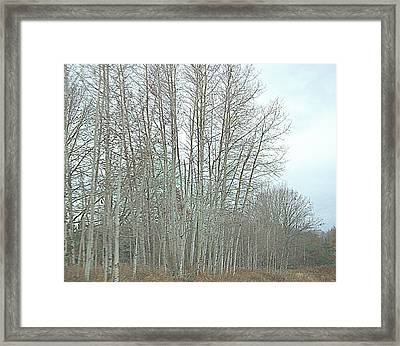 Roadside Railroad Lined With White Birches Newaygo County Michigan Framed Print by Rosemarie E Seppala