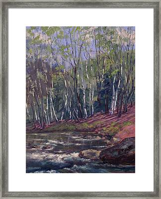 White Birches On Otter Brook Framed Print