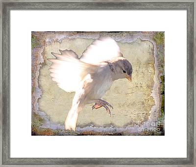 White Bird Framed Print by Jim Wright