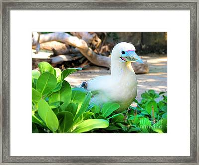 Framed Print featuring the photograph White Bird by Kristine Merc