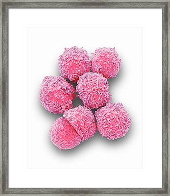 White Blood Cells Framed Print by Steve Gschmeissner