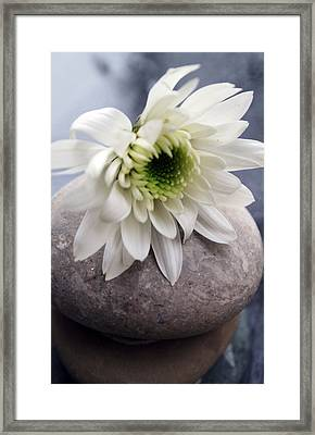 White Blossom On Rocks Framed Print by Linda Woods
