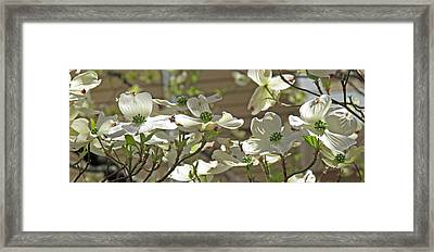 White Blossoms Framed Print by Barbara McDevitt