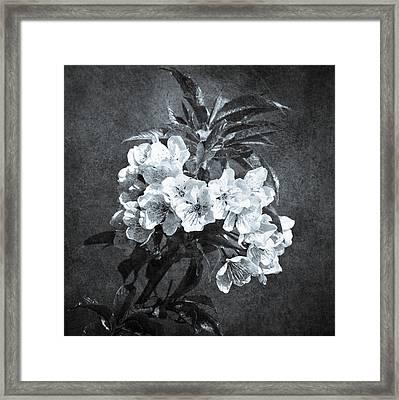 White Blossoms - Black And White Framed Print