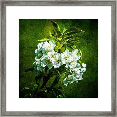 White Blossoms - Color Framed Print