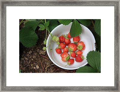 White Bowl With Strawberries Framed Print
