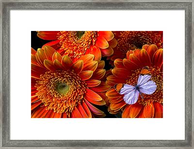 White Butterfly And Daisy's Framed Print