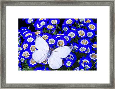White Butterfly In Blue Flowers Framed Print