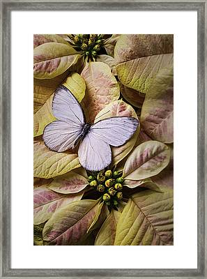 White Butterfly On Poinsettia Framed Print by Garry Gay