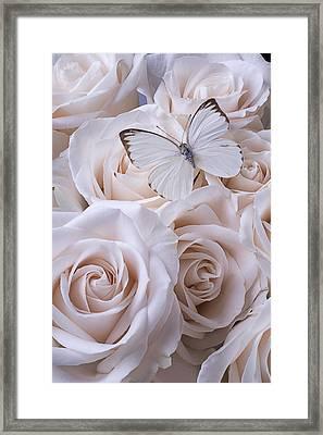 White Butterfly On White Roses Framed Print