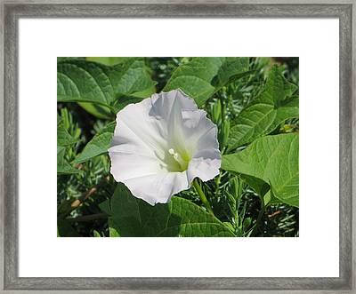 White Candour Framed Print by Sonali Gangane