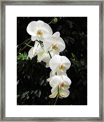 Framed Print featuring the photograph White Cascade by Harold Rau