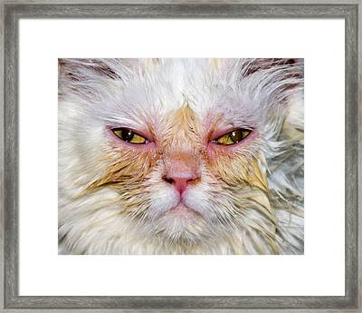 Scary White Cat Framed Print