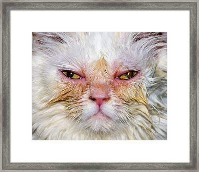 Scary White Cat Framed Print by Bob Slitzan