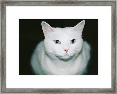 White Cat Framed Print