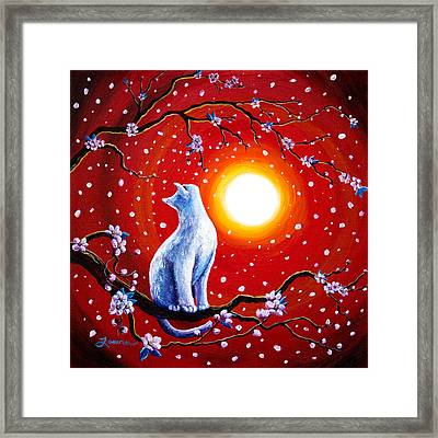 White Cat In Bright Sunset Framed Print by Laura Iverson