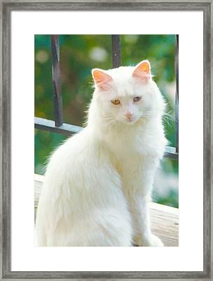 White Cat Framed Print