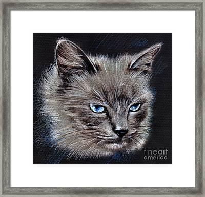 White Cat Portrait Framed Print