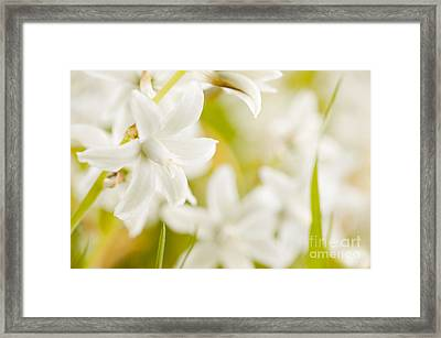 Ornithogalum Nutans White Flowers Detail  Framed Print by Arletta Cwalina