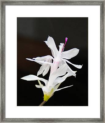 White Christmas Cactus Framed Print by B Wayne Mullins