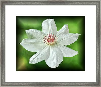 Framed Print featuring the photograph White Clematis by Richard Farrington