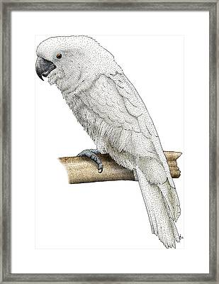 White Cockatoo Framed Print by Roger Hall