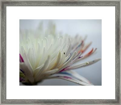 White Colors 2 Framed Print